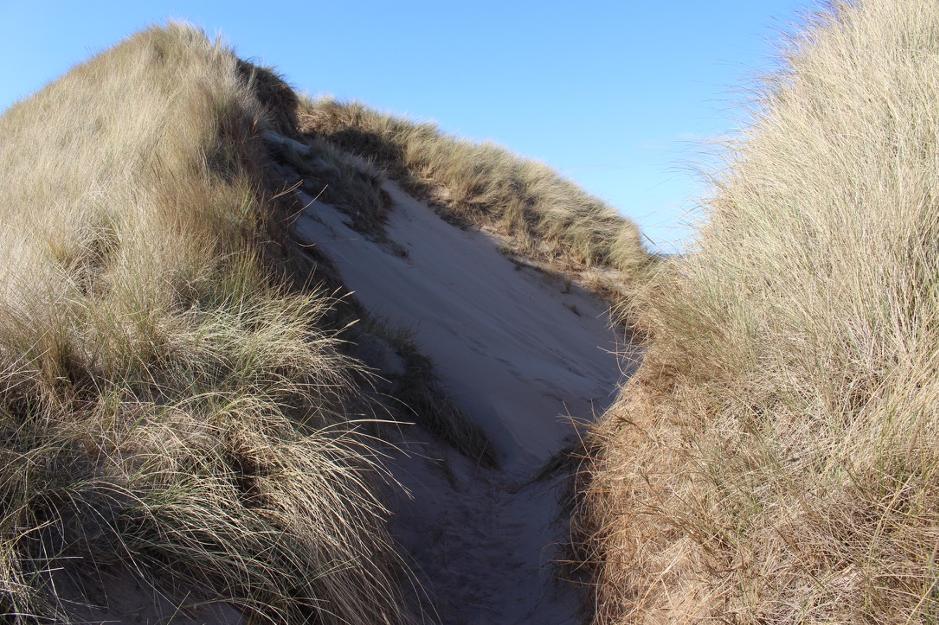 a grassy sandbank