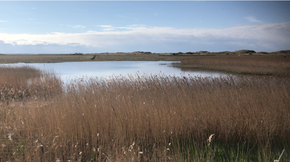 reeds enclose a body of water