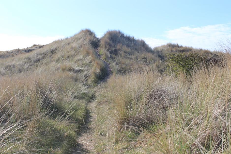 long grasses in a sandbank
