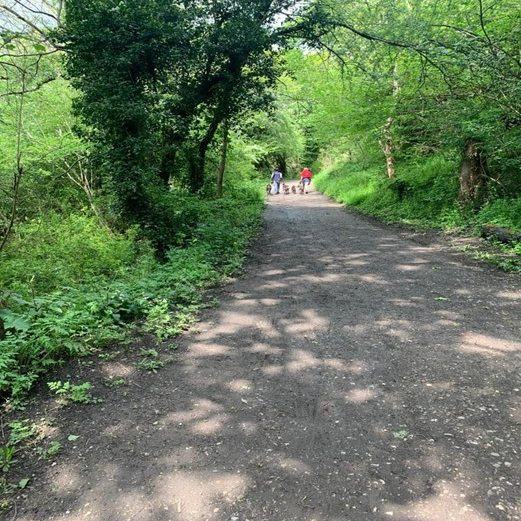dog walkers in the distance on a path lined with trees