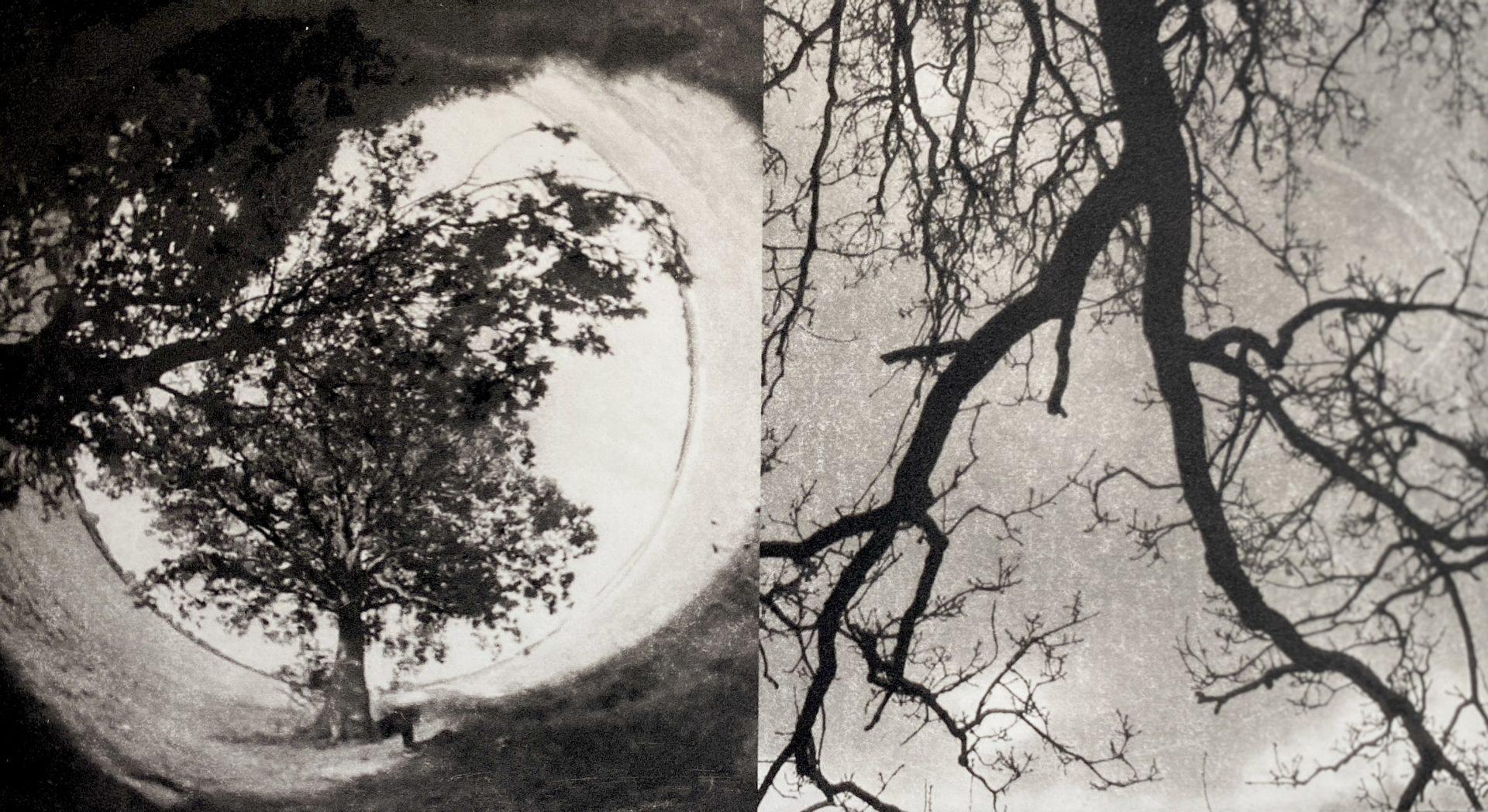 A swing hangs below an oak tree, looking out across a wide river