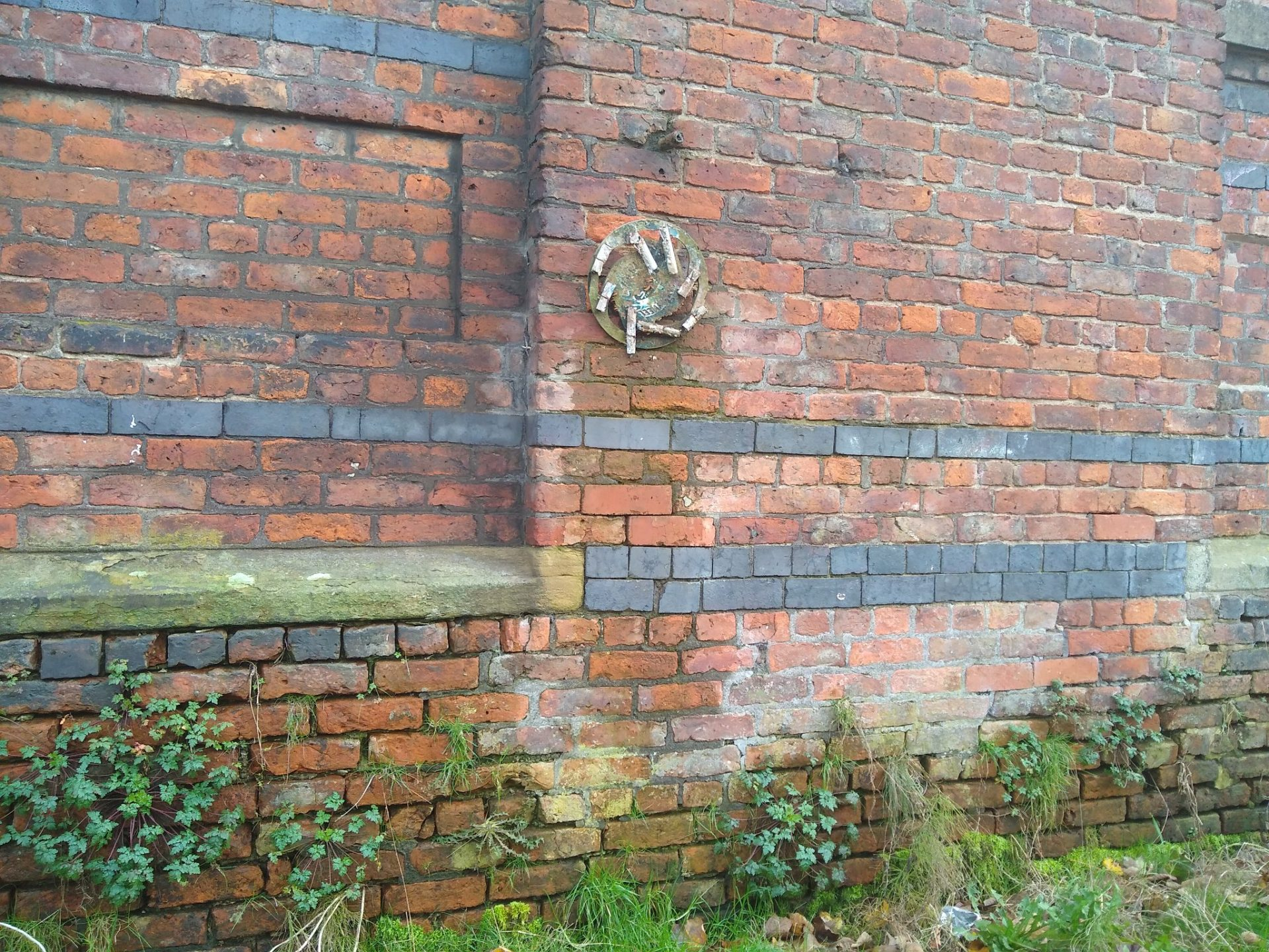 A red brick wall, wild plants and weeds are growing at the bottom, an old Catherine Wheel firework is pinned to the wall